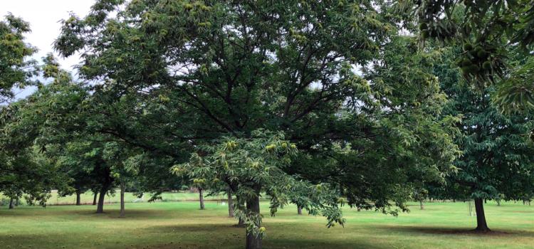 Keystone Trees