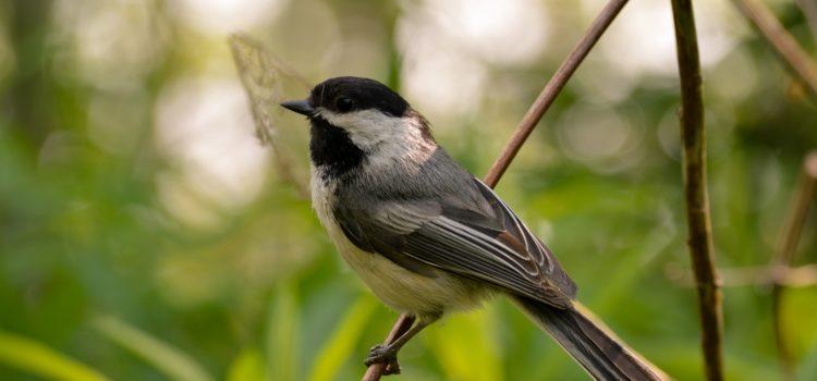 Protecting Birds