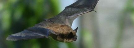 Newsday Coverage: Bat Signals